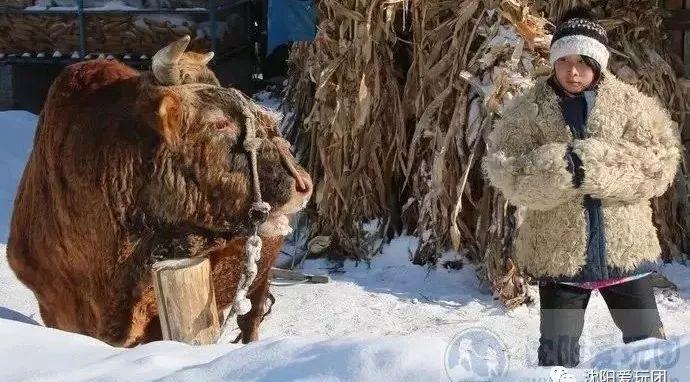 12月9-10日 雪村 · 松岭